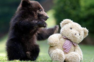 В Киеве пройдет фестиваль игрушечных медведей