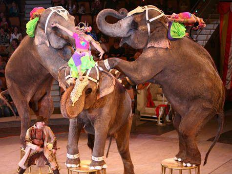 На радість дітям і дорослим: у столицю привезуть слонів-велетнів